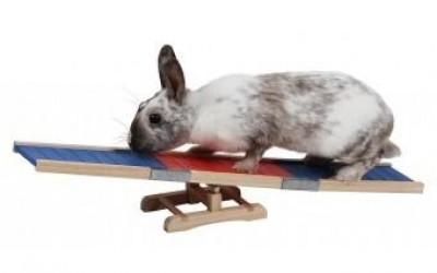 Passatempi e arricchimento ambientale per il coniglio da compagnia
